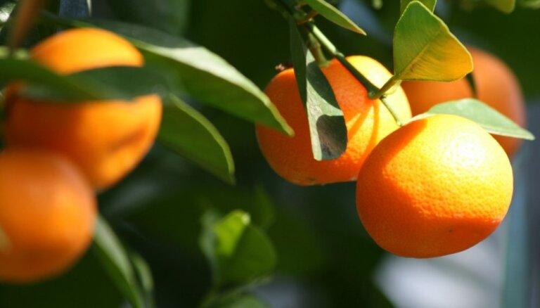 Взойдет все: как вырастить дома экзотический фрукт из банальной косточки