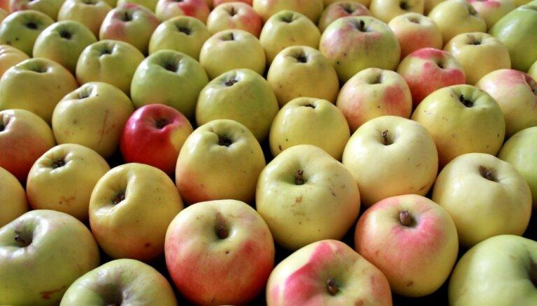Noslēdzies grāmatu mākslas konkursa 'Zelta ābele' balsojums!