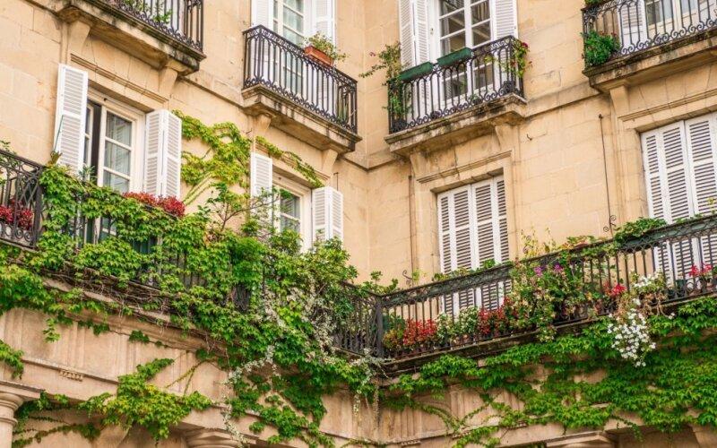 Засадил на балконе — photo 6
