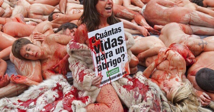 фото акции защиты животных барселона рекомендована
