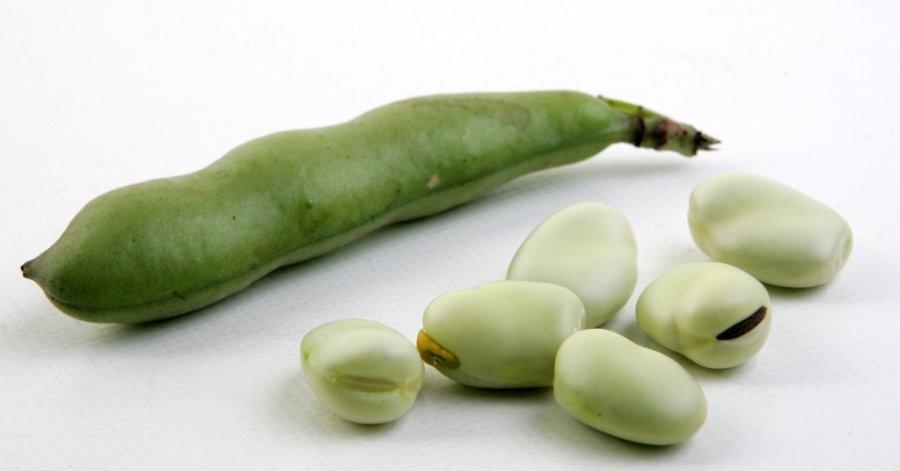 картинки овоща бобы вас есть фото