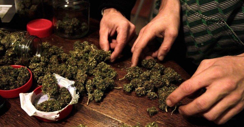 Марихуана выборг марихуаны клетки