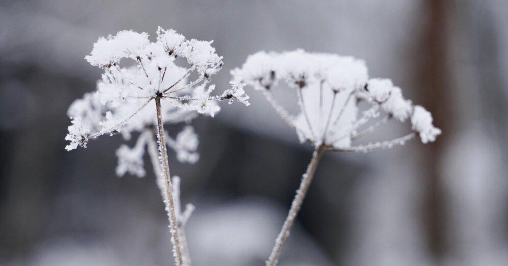В воскресенье станет немного теплее, ожидается снег