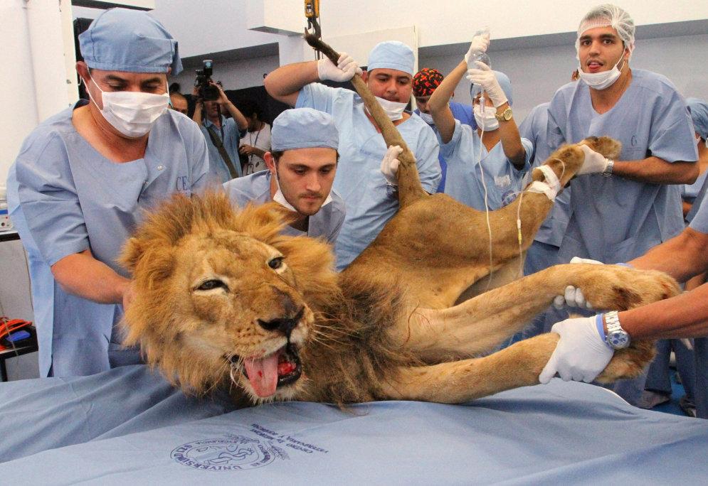 14 ФОТО живых зверей, которые погибли бы без врачебной помощи людей