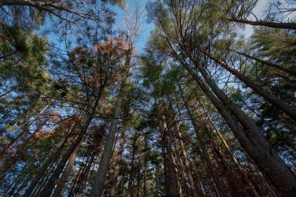 Izzinoša ekskursija pa slepenajiem bunkuriem mežā