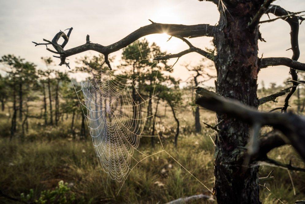 Родные болота в Кемери привели в восторг зарубежные СМИ (не прошло и 8000 лет)