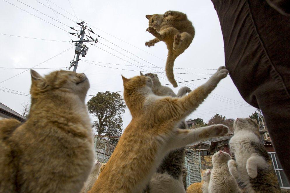Kaķu armija iekaro nomaļu salu, atstājot iedzīvotājus mazākumā