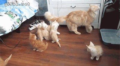 Bet mammu!