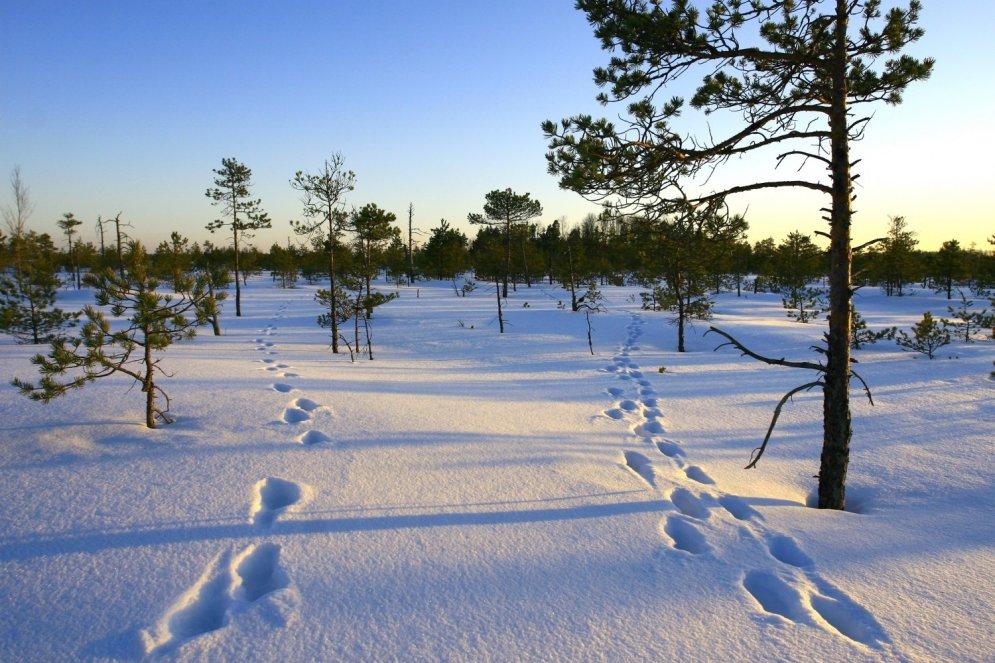 Septiņas idejas aktīvai atpūtai ziemā