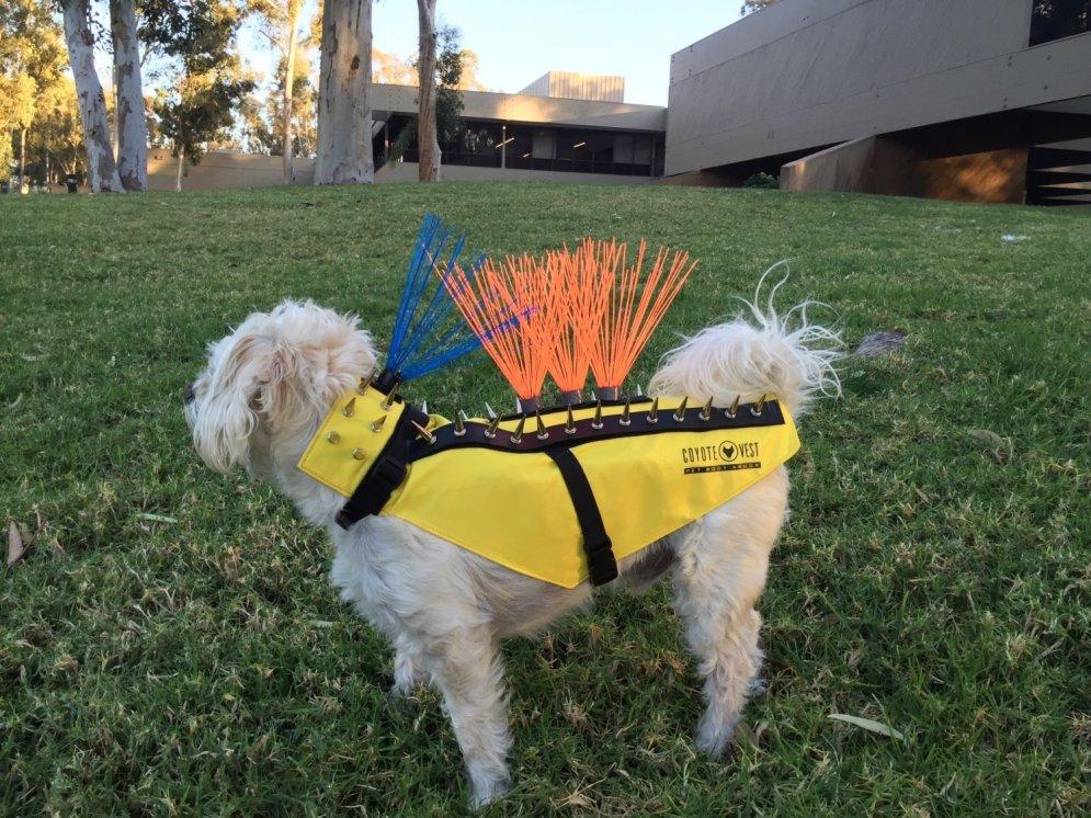 Jaunums suņu modē: Veste, kas padara klēpju sunīšus neiznīcināmus