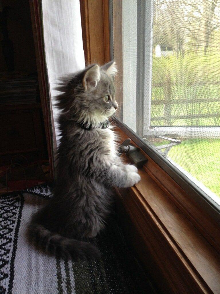 ФОТО: 15 очаровательных котят, которые скрасят этот хмурый понедельник