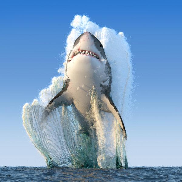 Haizivs