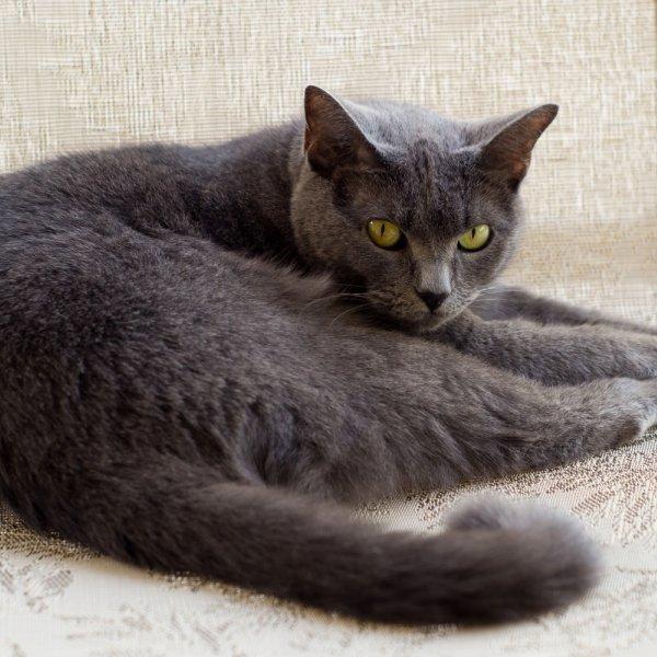 Kartēziešu kaķis