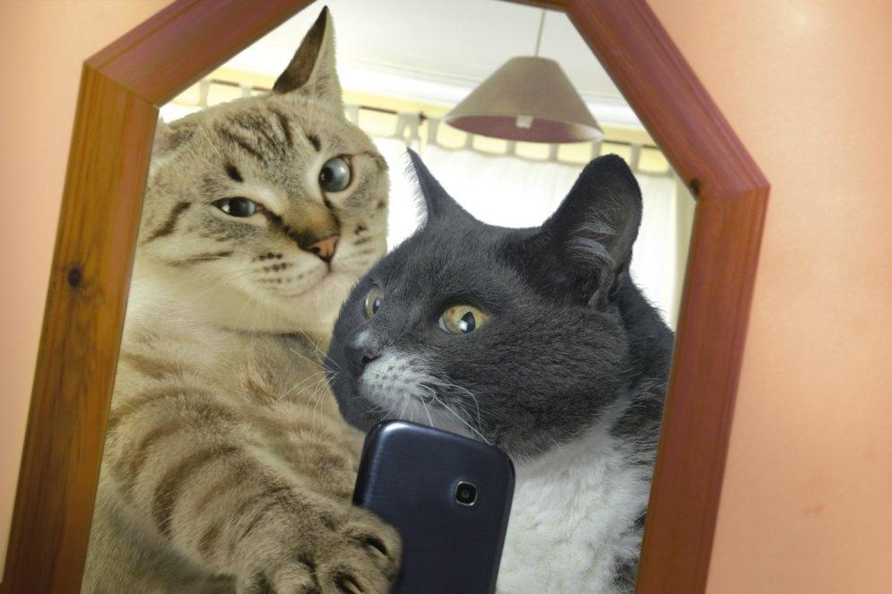 Laists klajā pasaulē pirmais kalendārs ar kaķu selfijiem