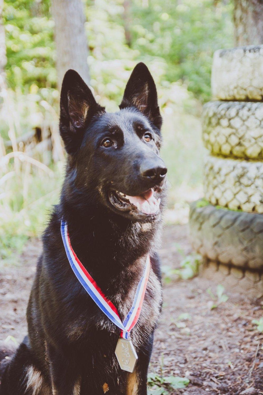 Член пса в ее попе 17 фотография
