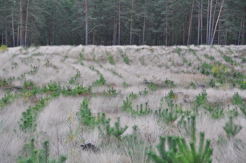 Meža atjaunošana pavasarī – kā tas notiek?