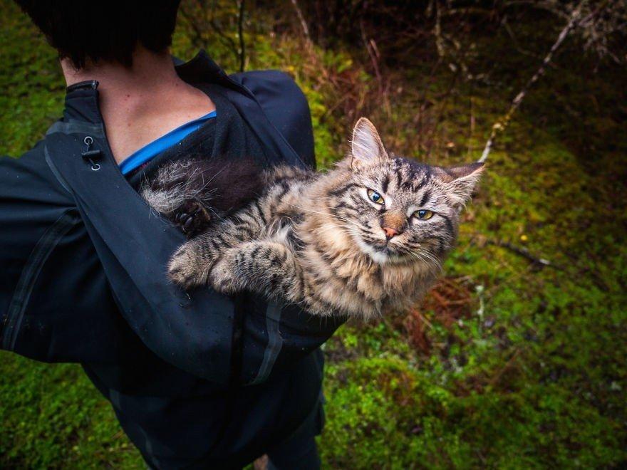 Divi nāvei pamesti kaķēni dodas piedzīvojumos