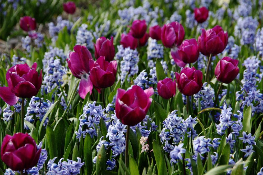 Фото безумно красивых цветов 77