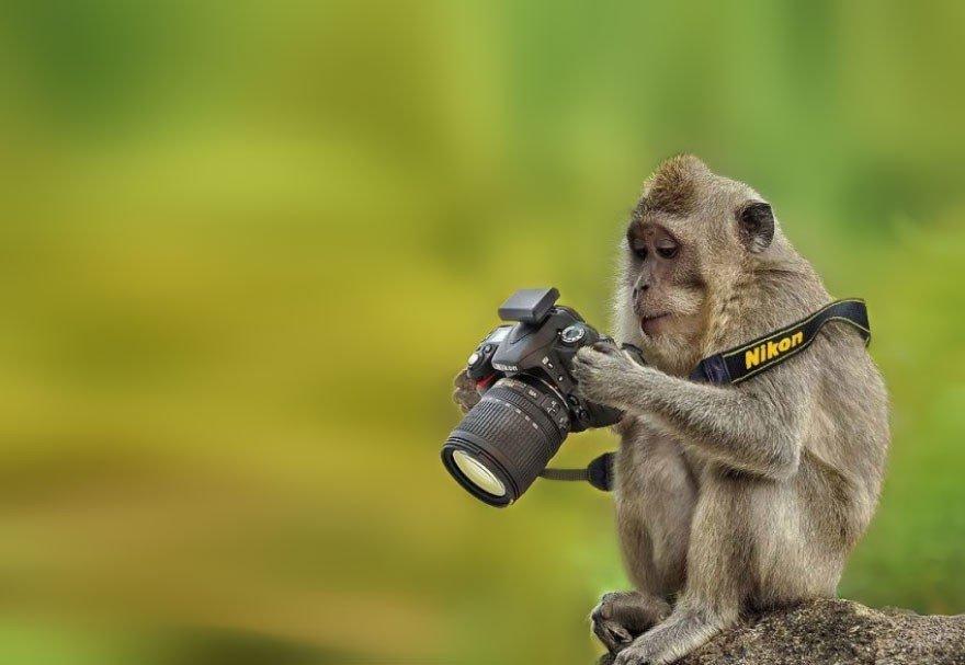 Zvēriņi, kuri paši nolēmuši kļūt par īstiem fotogrāfiem